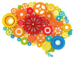 cogs brain